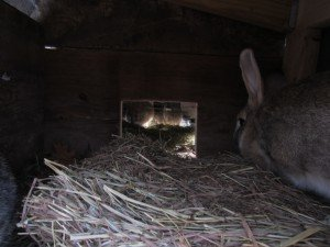 Cozy rabbit den with lots of straw