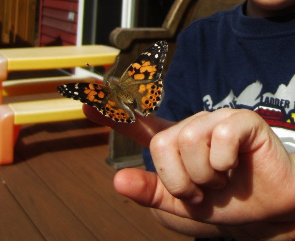 releasing a butterfly into the wild after growing it from a caterpillar