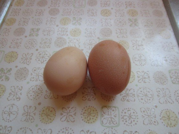 Our first two eggs...so exciting!!!