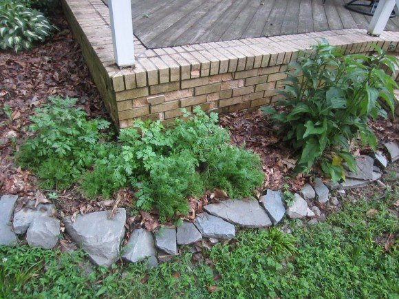 Traditional landscaping replaced with Echinacea, chamomile, and feverfew