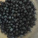 blueberries hand-picked by Matt