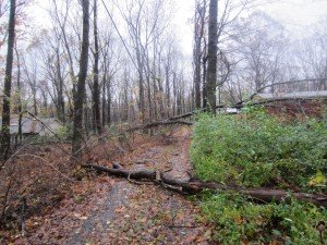 Tree down on power lines after Sandy in 2012.  Not a job to tackle on your own!!