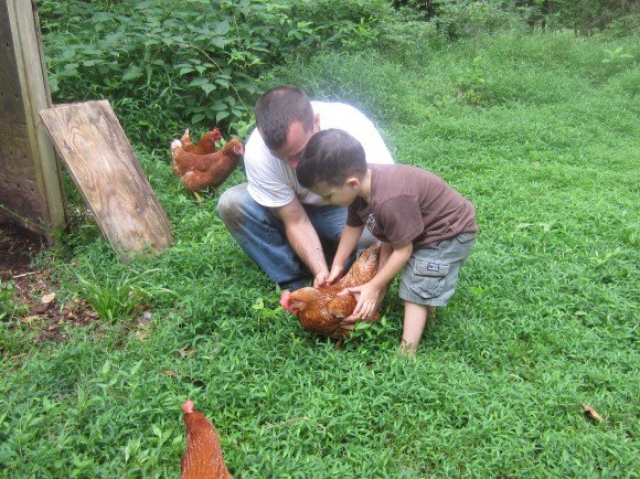 learning how to catch a chicken