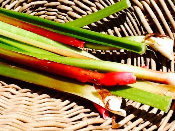 Fresh Rhubarb From Our Garden