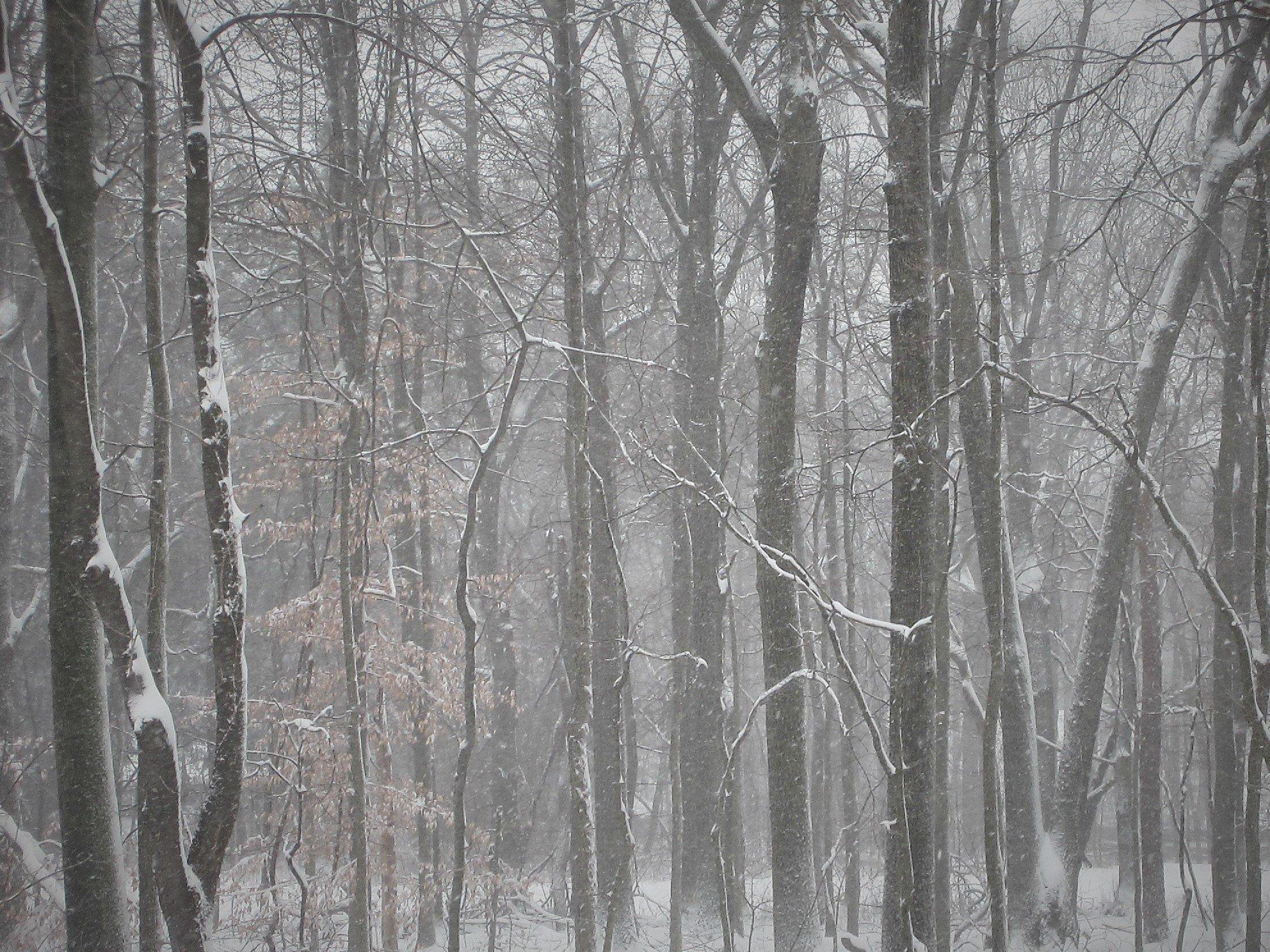 winter snow 09Feb2017 – trees 3