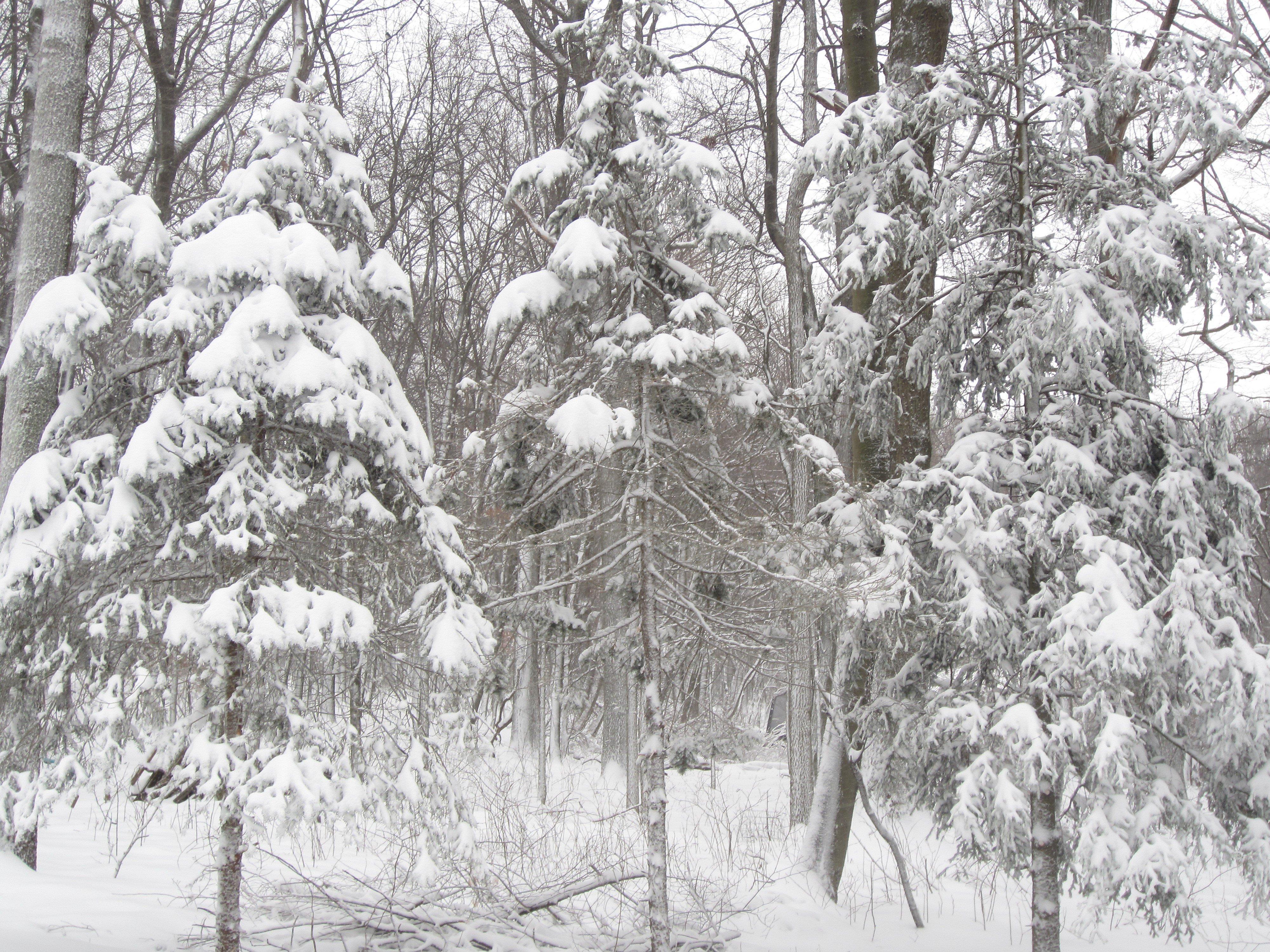 winter snow 09Feb2017 – trees 1