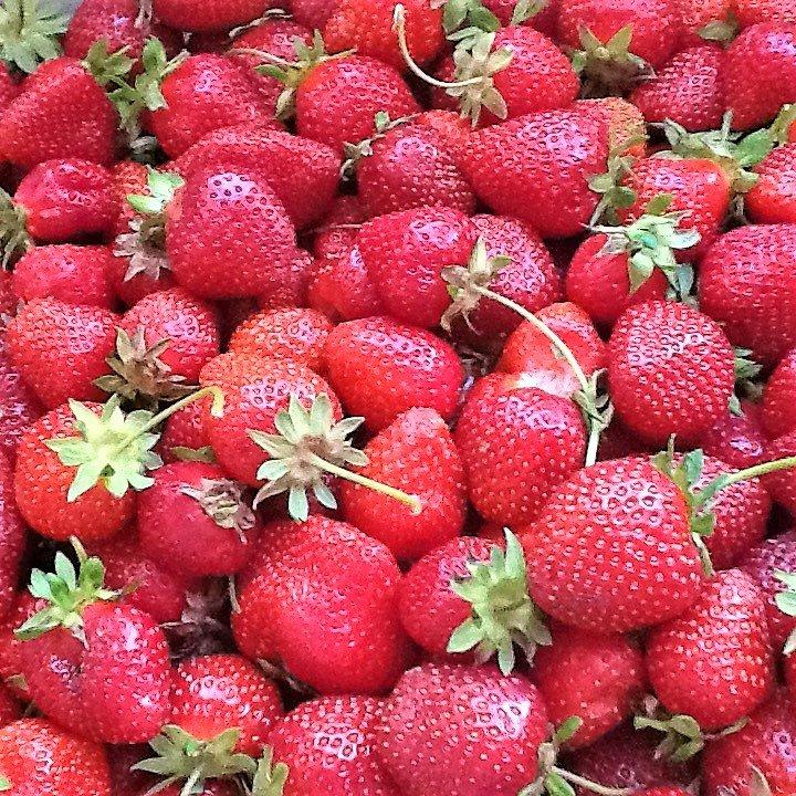 fresh picked strawberries in season!