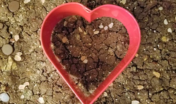 heart-shaped Black Bean Brownies for Valentine's Day