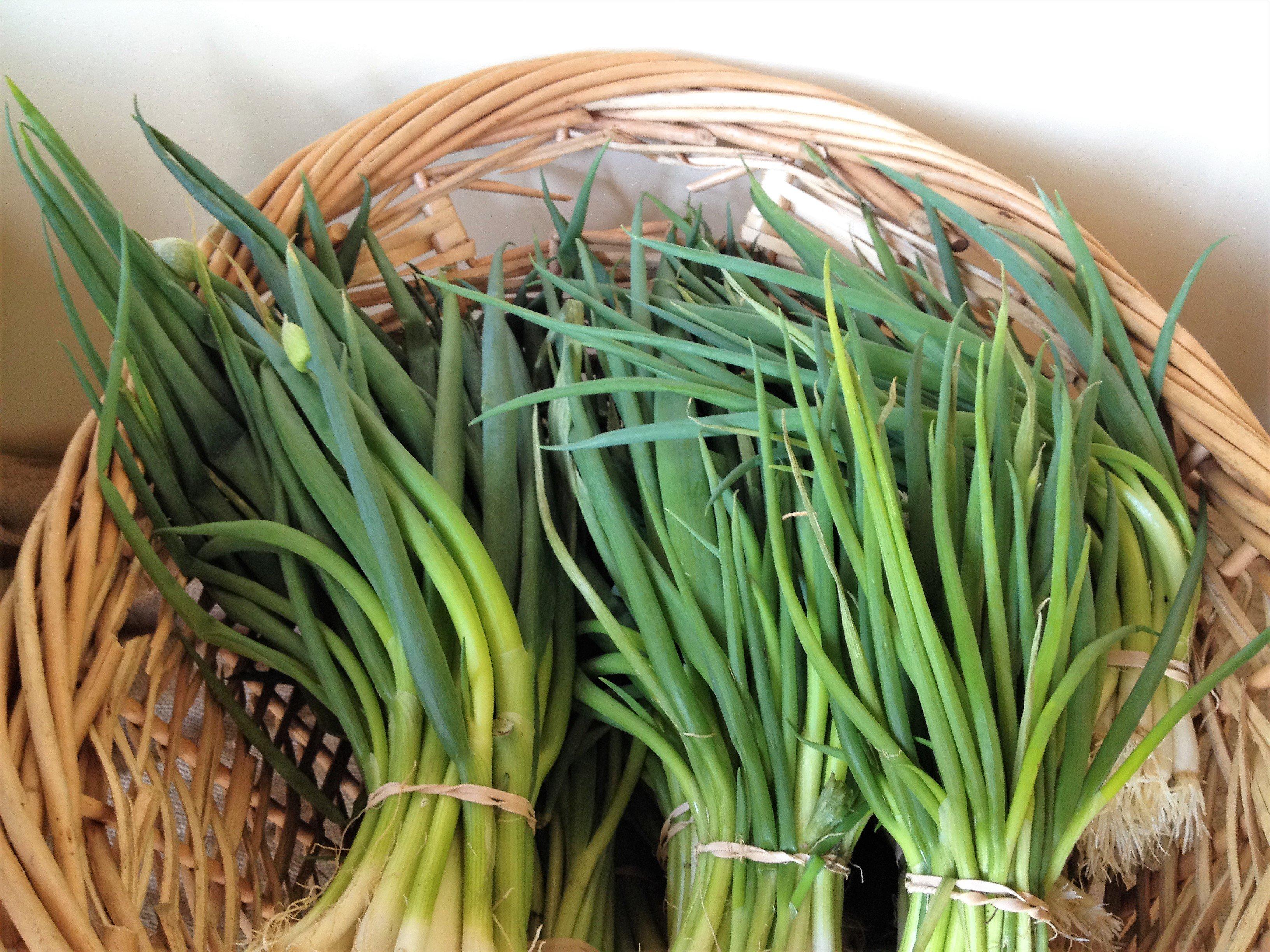 Green Onions From Godshall Farm
